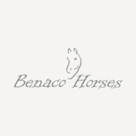 Benaco horses